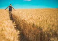 Kelebihan dan Kekurangan Jurusan Agribisnis
