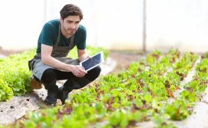 Prospek Kerja Pertanian